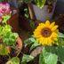 まだまだ暑いけど花壇のメンテナンス
